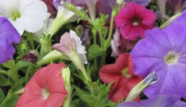 annual austin spring home garden show. Black Bedroom Furniture Sets. Home Design Ideas