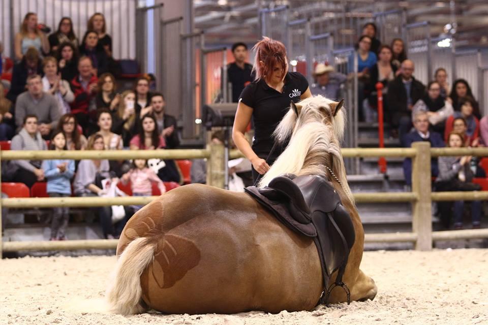 Salon du cheval de paris paris france - Salon du master paris ...